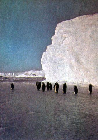 Пингвины летом картинки